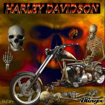Vehicles   Harley Davidson