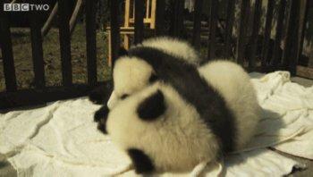 Cute animal hug gif